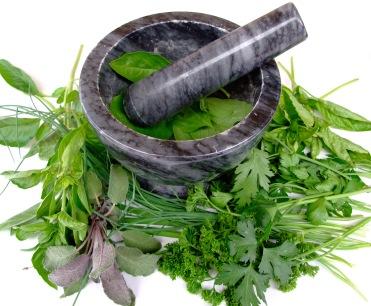 planta-medicinal
